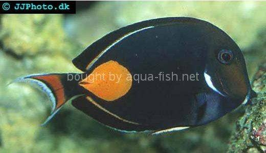 Achilles Tang, picture 1