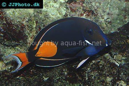 Achilles Tang, picture 2