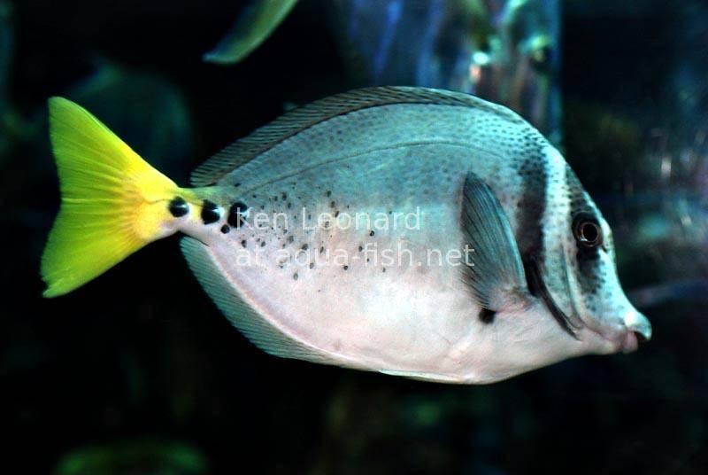 yellowtail marine memo